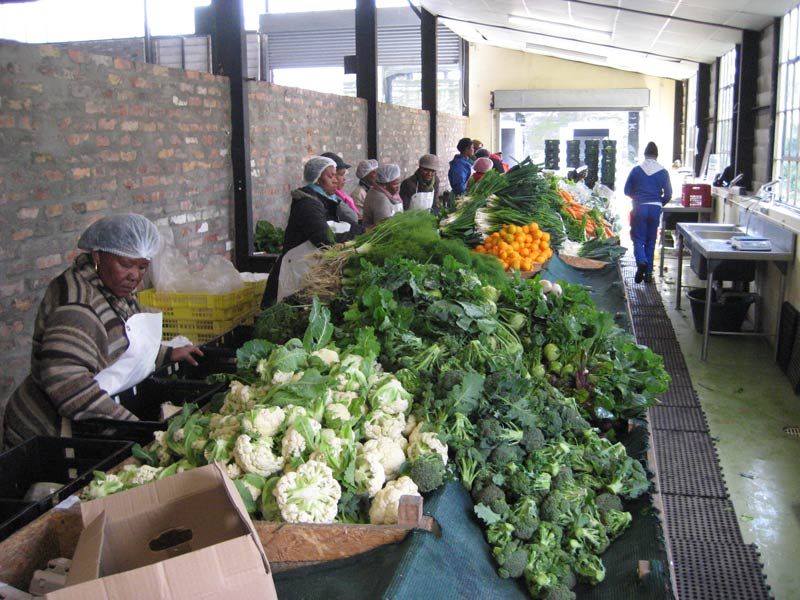 Community members pack vegetables at Harvest for Hope community garden. (Pic: Alexandra Farrington)