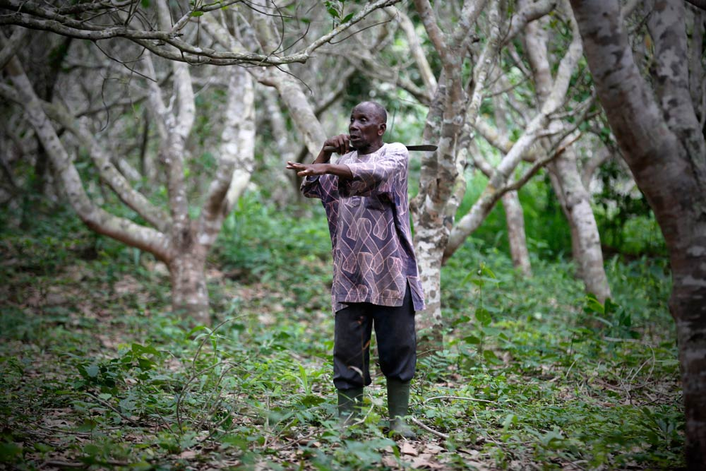 Henri Kouakou at his cashew plantation in Bondoukou. (Pic: Reuters)