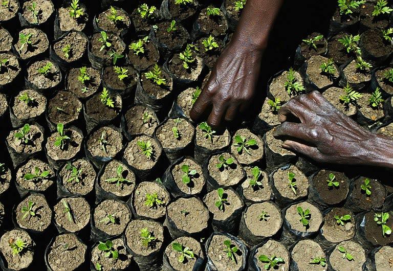 Farmers tend newly planted trees  Kimahuri, Kenya. (AFP)